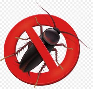 Особенности уничтожения тараканов